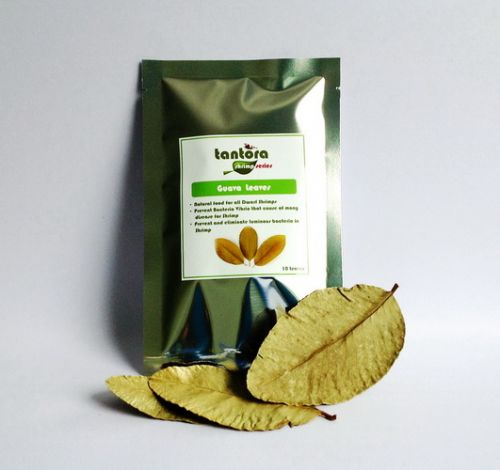 Tantora Dried Guava Leaves - suszone liście guavy