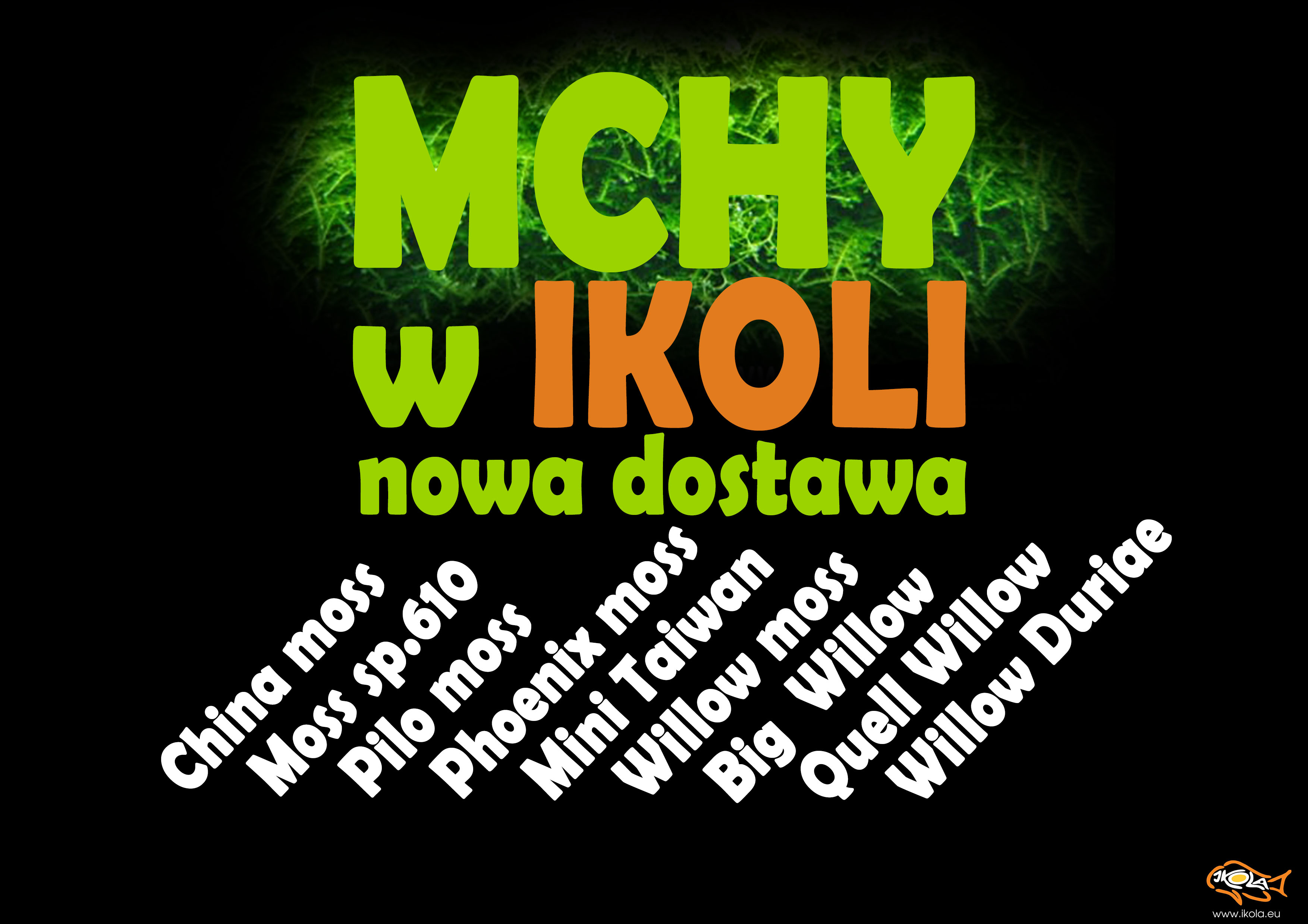 mchy